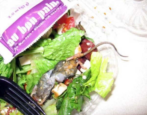 10 hazır salatadaki fare