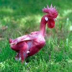 Tanımakta Güçlük Çekeceğiniz 12 Tüysüz Hayvan