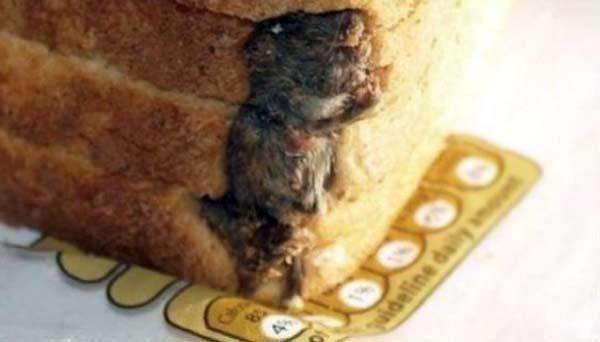 4 ekmekteki fare