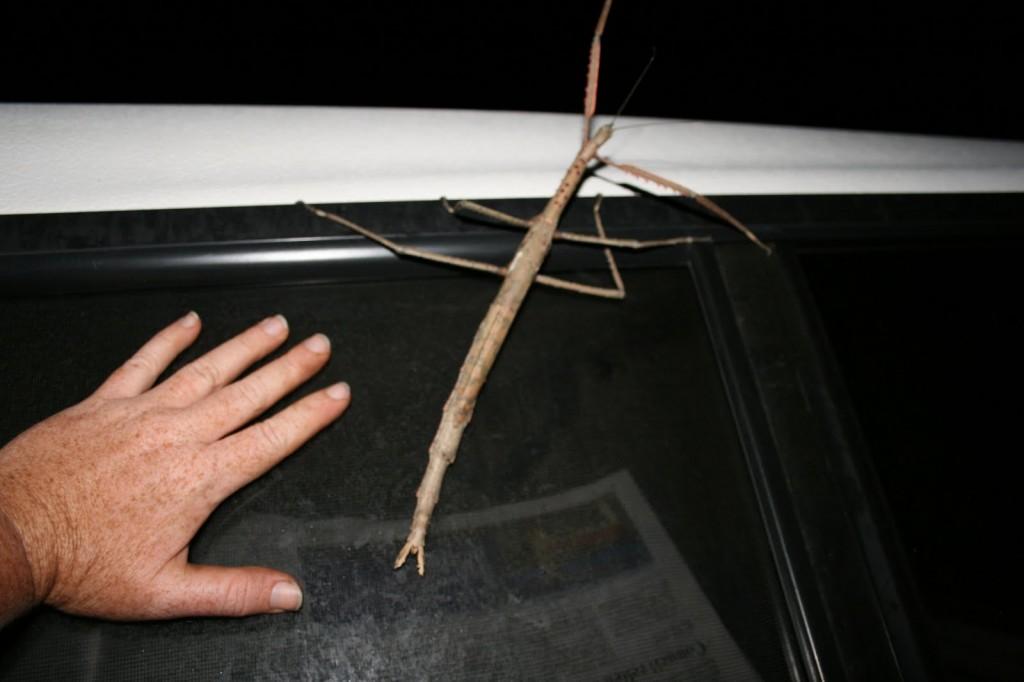 5 stick