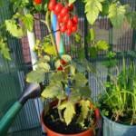 Balkonda sebze yetiştirmek isteyenlere 5 öneri