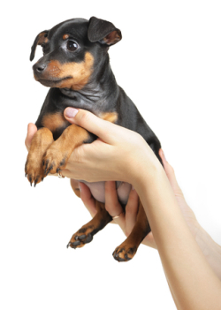 köpek yavru